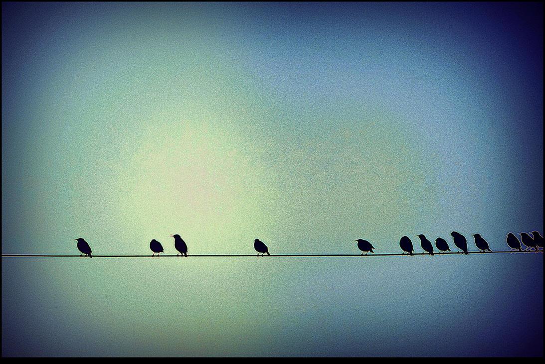 Flock of Starlings by surrealistic-gloom