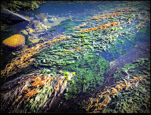 Algae By The River