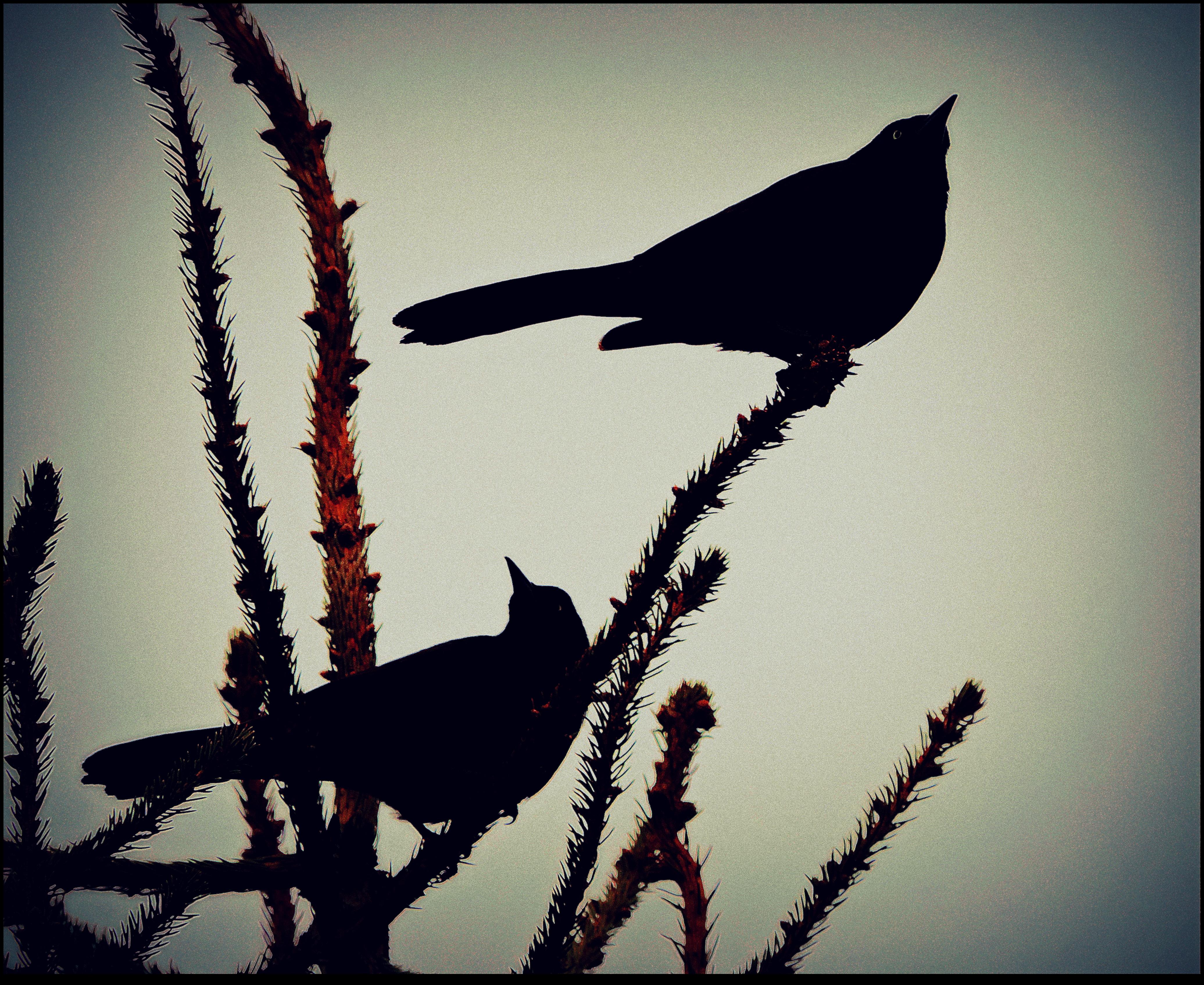 Harmony by surrealistic-gloom