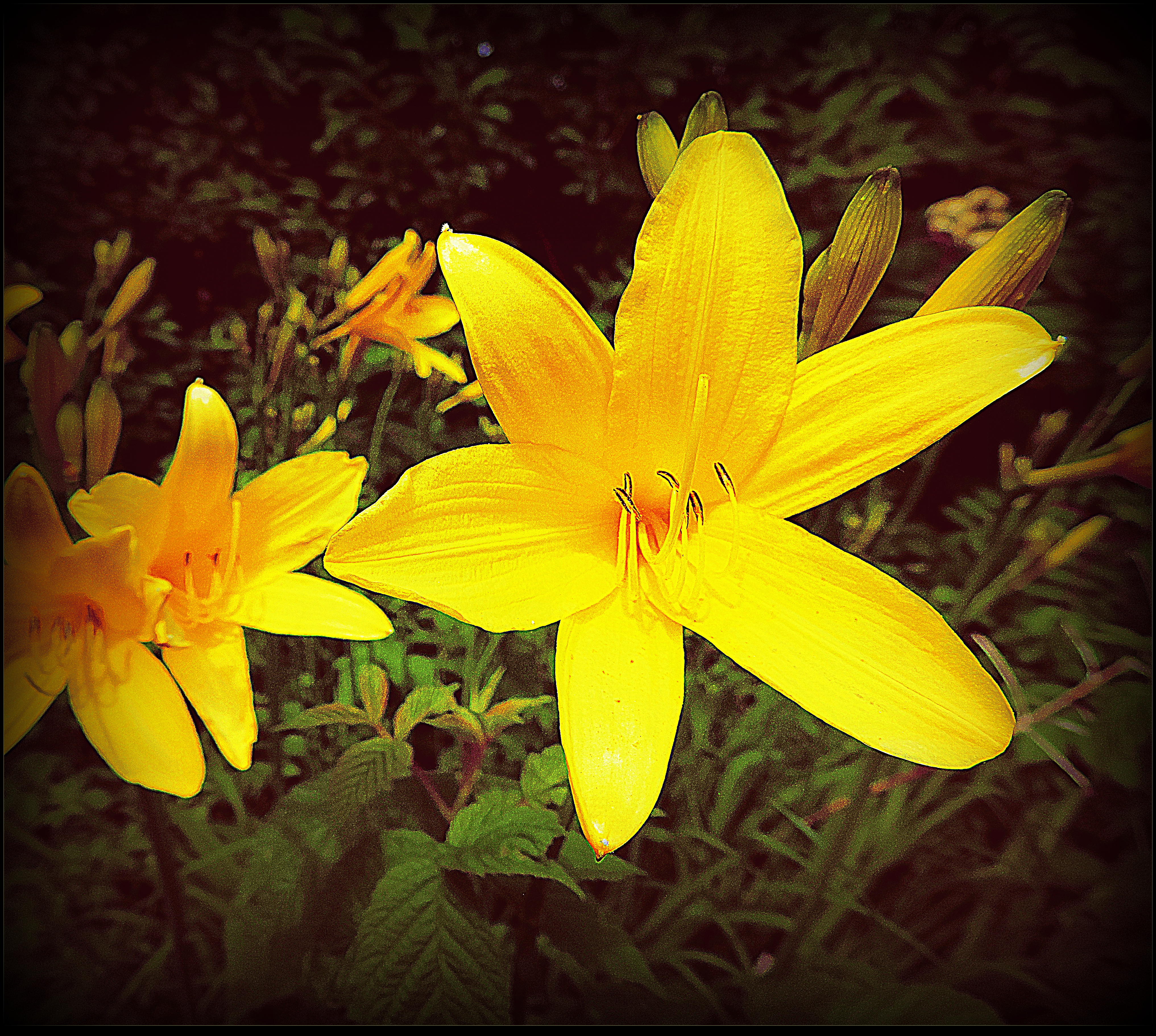Day Lilies by surrealistic-gloom