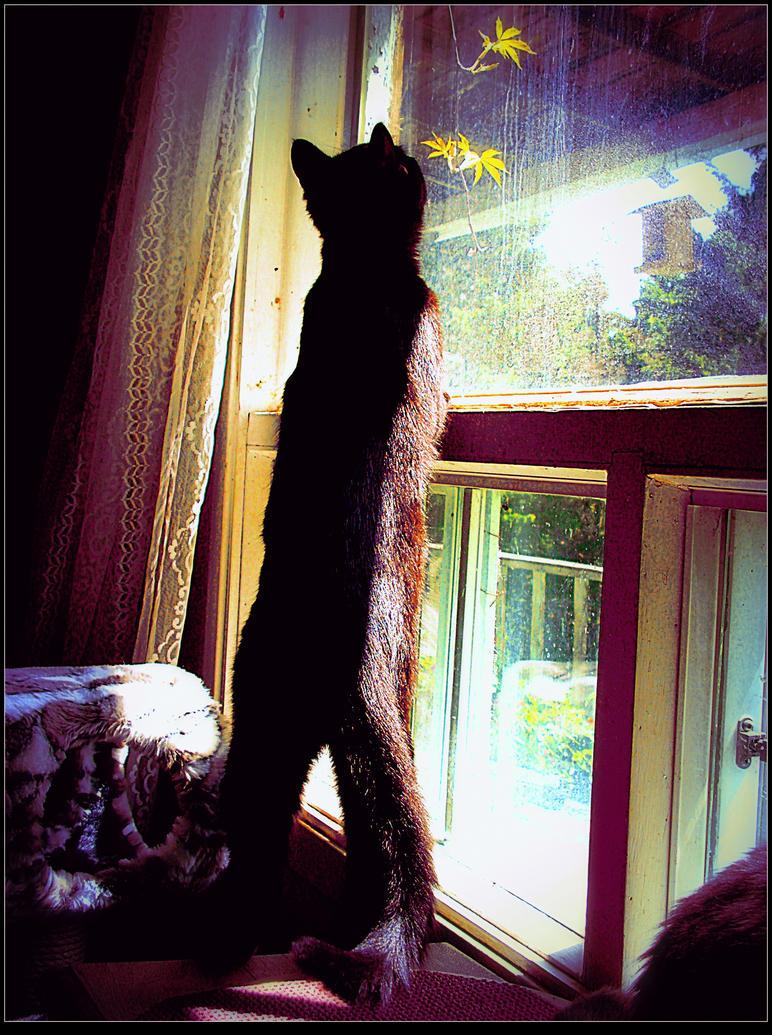 Curiosity kills the kitten. by surrealistic-gloom