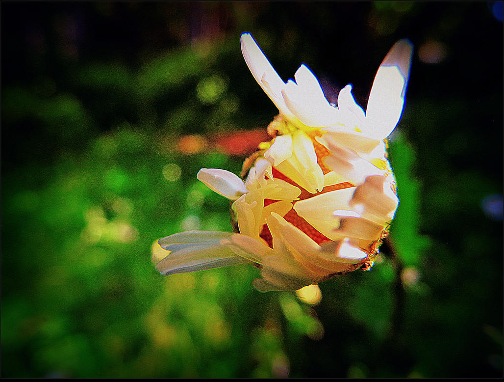 Blooming... by surrealistic-gloom