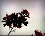 Pretty Bush Flowers