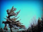 Gloomy Tree in Spring