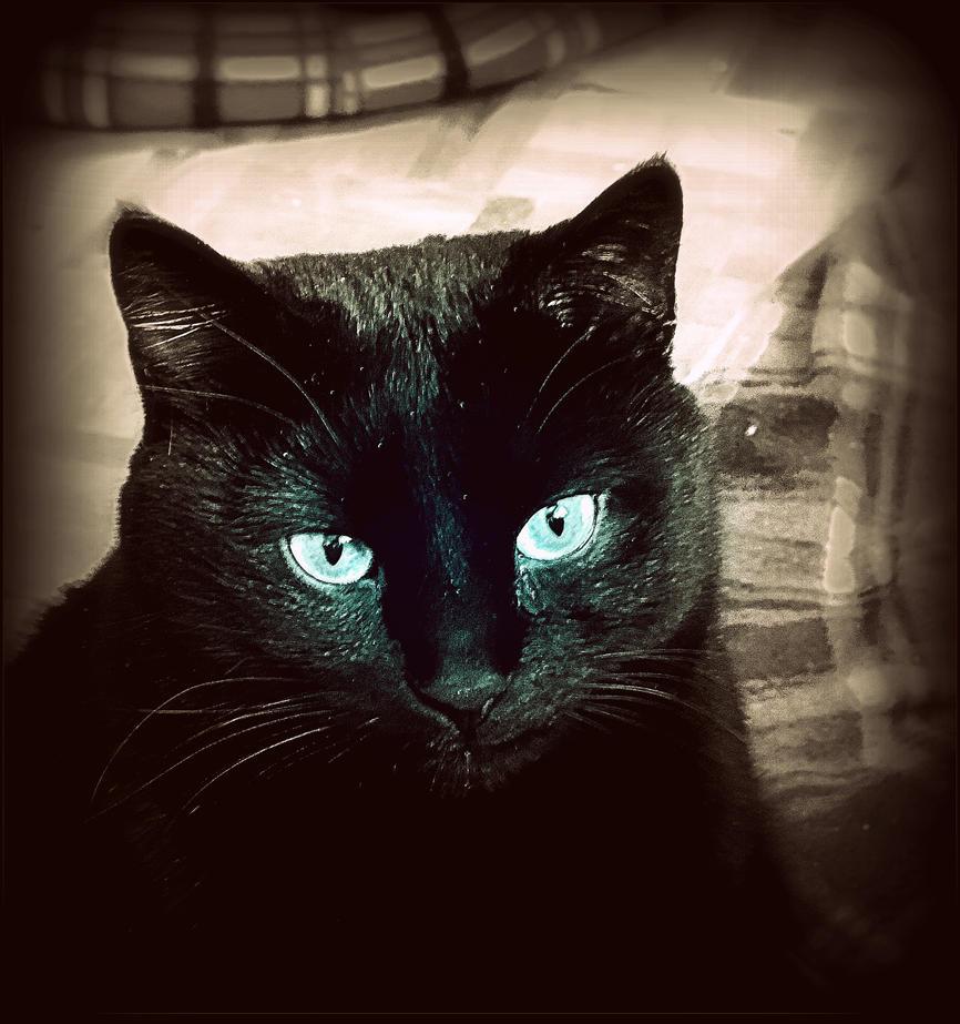 My Kitten by surrealistic-gloom
