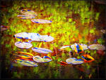 Waterlilies on reflected water