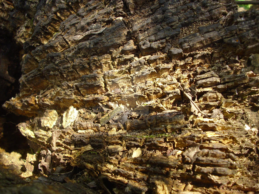 Tree Bark Texture by StefanRasa