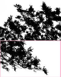 acacia png by Nagissimo