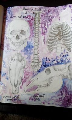 skulls and bones study by ZollaUchiha
