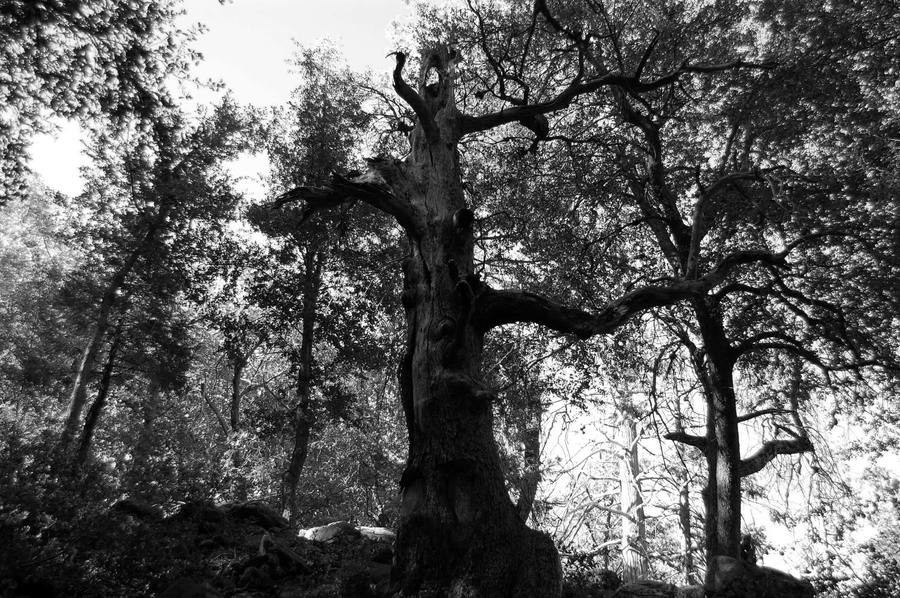 Cool Tree Black And White