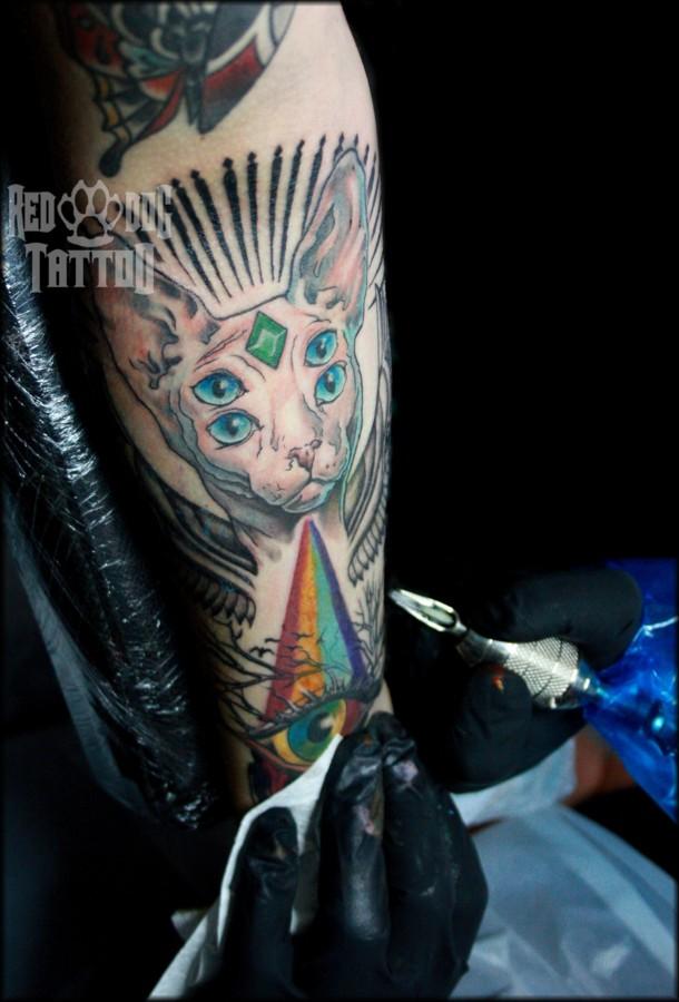 The amazing hairless cat tattoo by Reddogtattoo