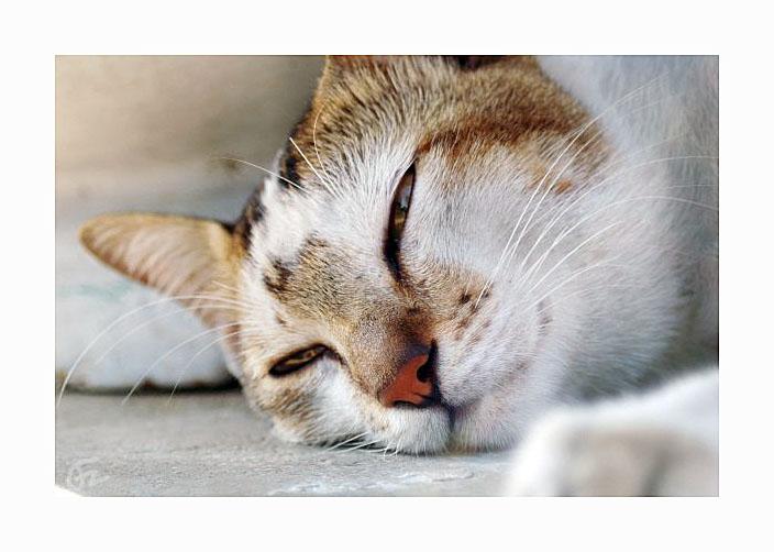 sleepy cat by firmanzhou