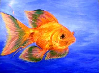 Still A Goldfish by mightymorfin