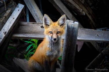 Foxy 2 by Monkeyboy41