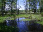 Pond XIII