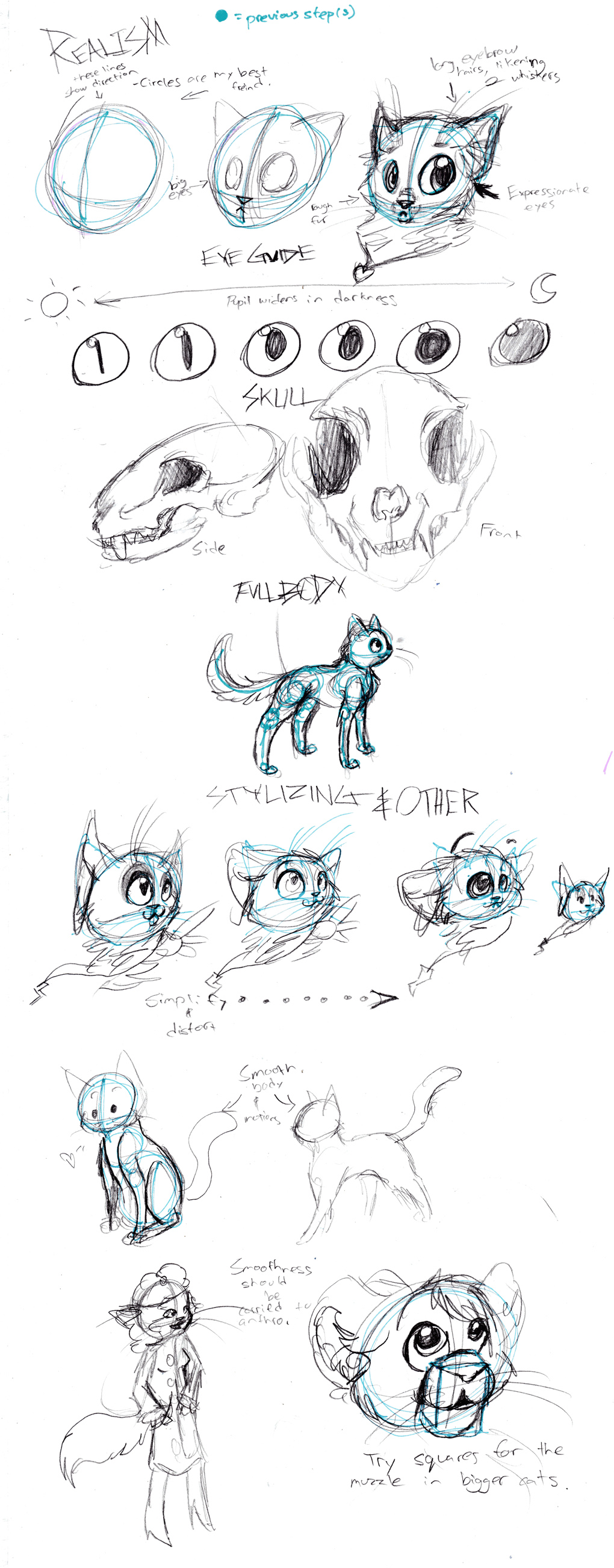 Cat anatomy tutorial by Zakeno on DeviantArt
