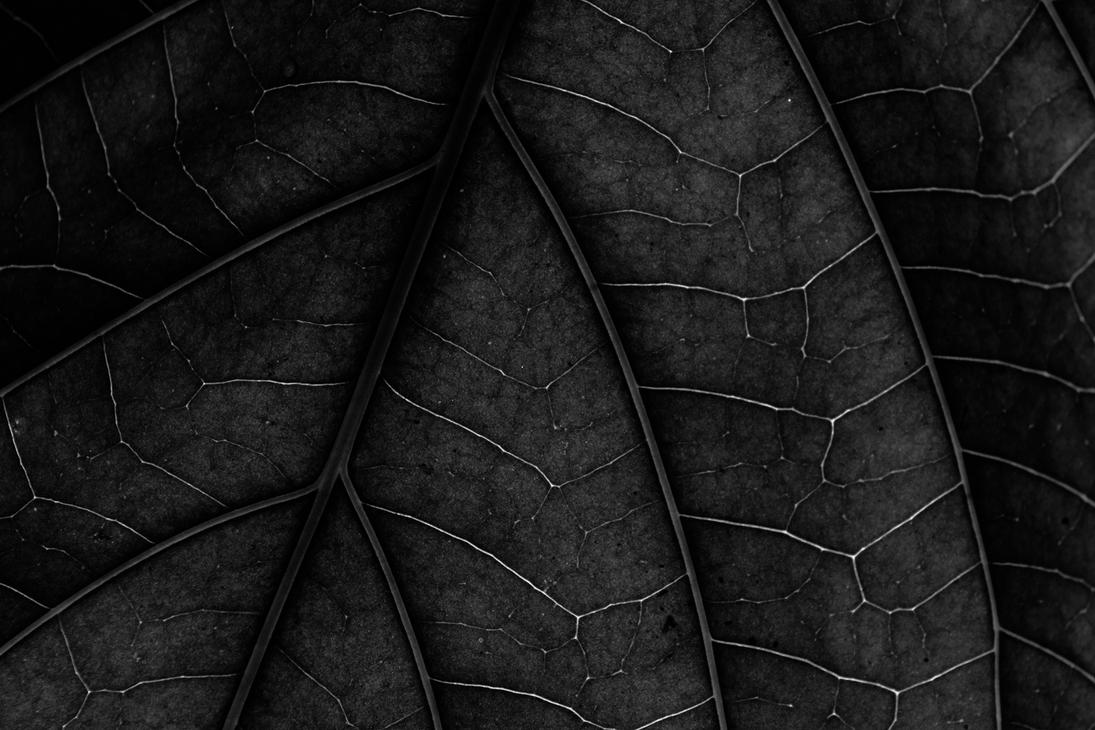 trees inside a leaf by rishi-11-2002