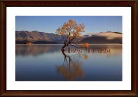 I love to live