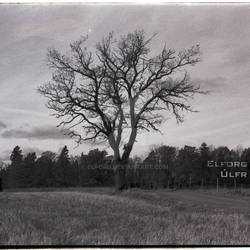 Elforg - Ulfr (Album Cover)