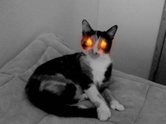 Demon Kitty Sittin Pretty