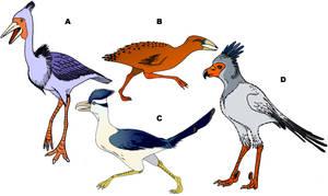 Speculative cursorial avian predators