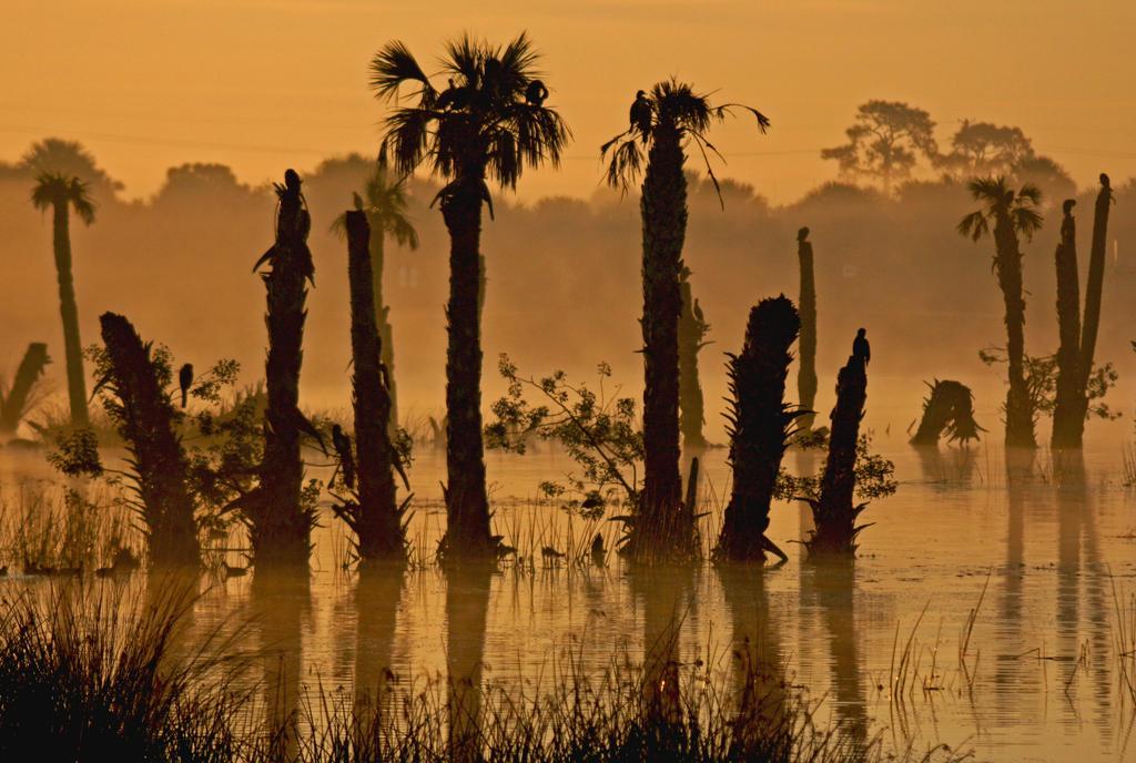 Misty Morning Wetland Landscape by Kippenwolf