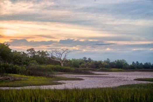 Marsh Tree Summer Sunset