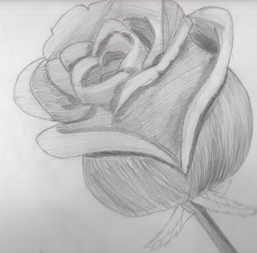 Observational Drawing Of A Rose