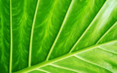 Leaf it Green by soelu412