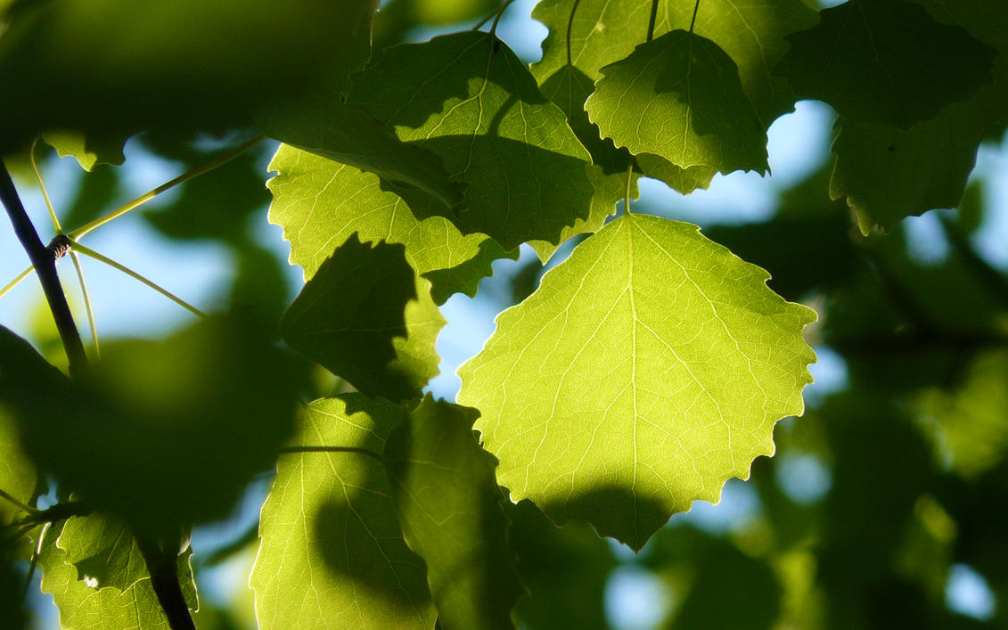 Leaf it Green V by soelu412