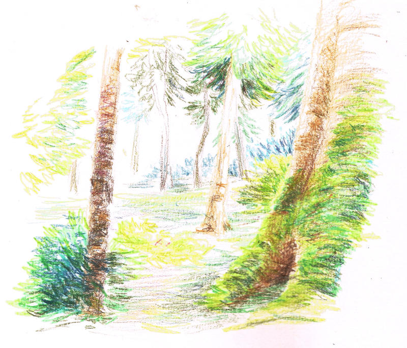 Forest by Adharan