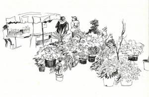 Lily market