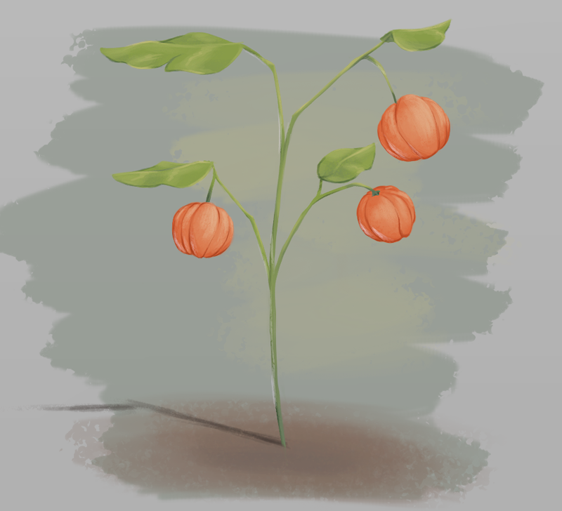 Pumpkin Berries By Rinzley-d84rjbc by TheDangerCat