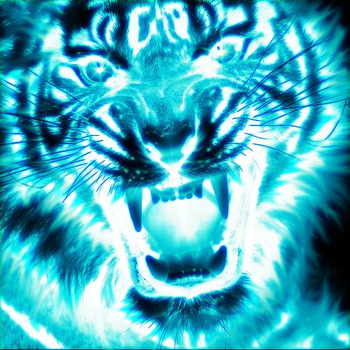 Blue Fire Tiger Wallpaper 94793 Newsmov
