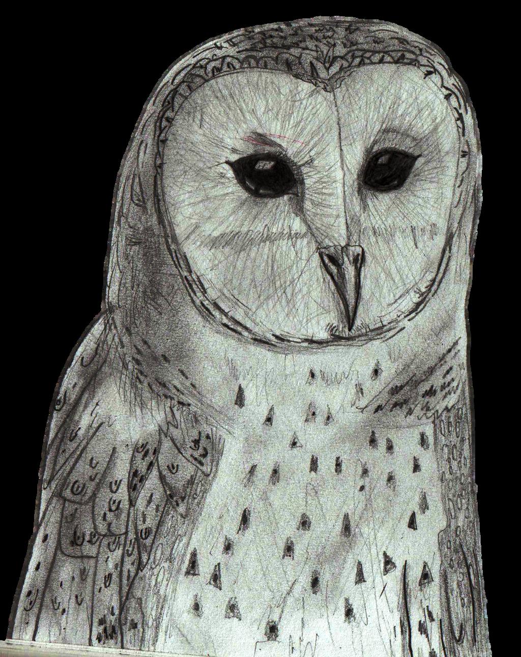 Australian Masked Owl Pencil Sketch By Mrdanieljking On Deviantart