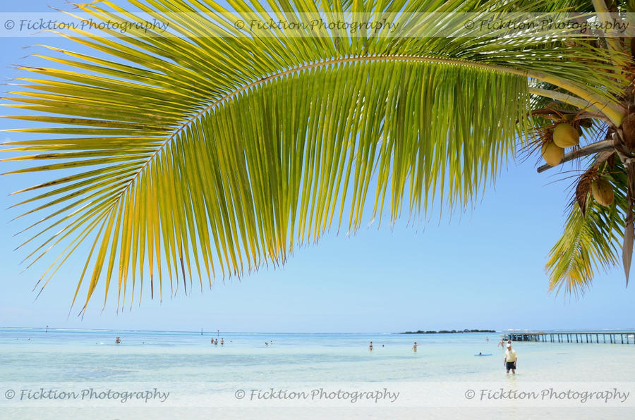 Frond by FicktionPhotography