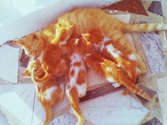 http://fc03.deviantart.net/fs49/f/2009/216/f/a/Red_head_kittens_5_by_tamar1111.jpg