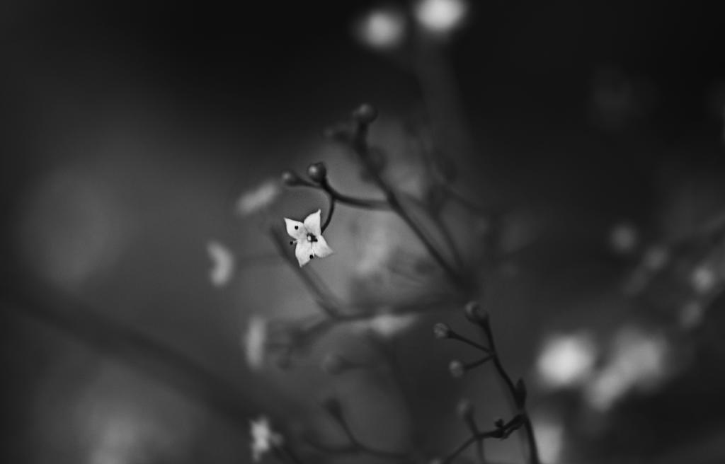 Little flower by DacsMayn
