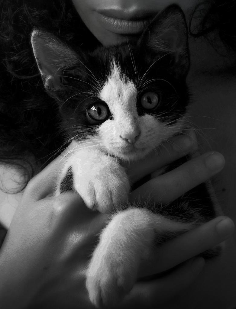Little kitty by DacsMayn