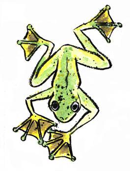 Abah River Flying Frog
