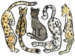 ALLTHELEOPARDS
