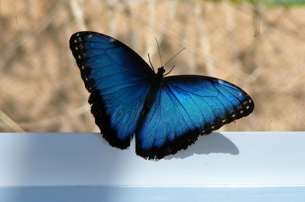 Blue by RhapsodyinAlto