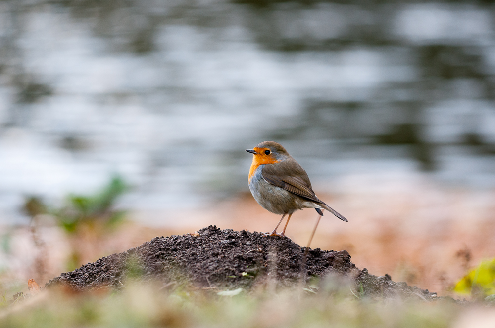The early bird.. by Blubdi-Photography
