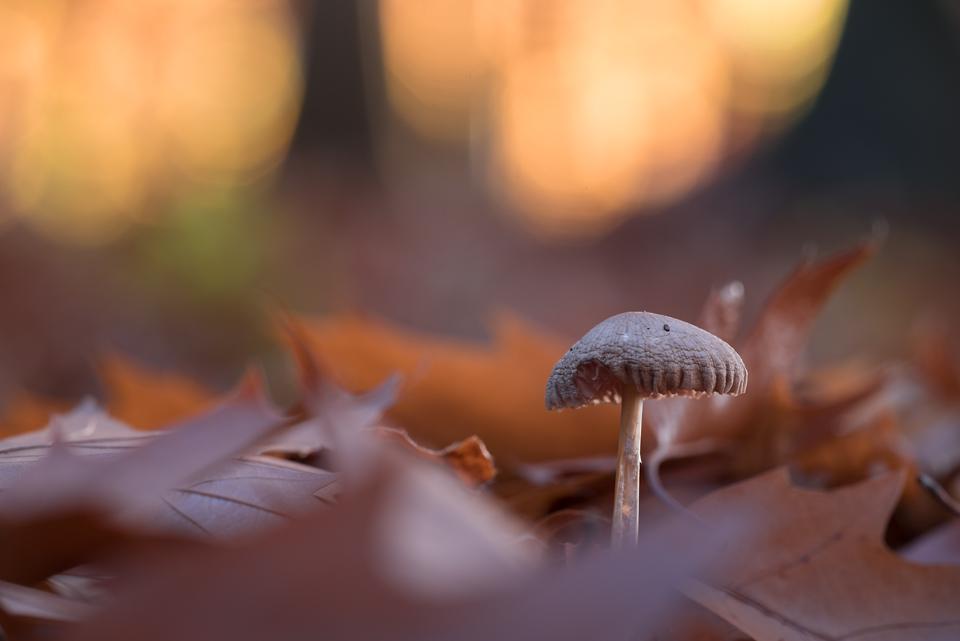mushroom by Blubdi-Photography