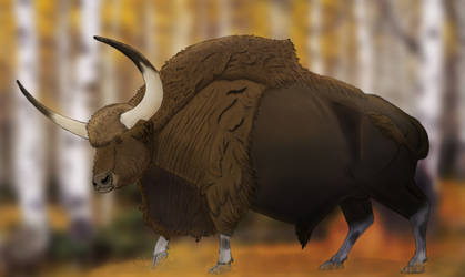 Long Horned Bison (with Background)