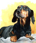 Dog by oazen2008