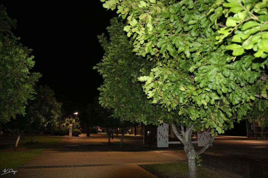 Tree 2 by winterSlayer