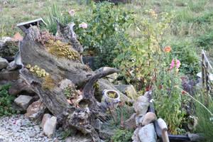 Garden 46