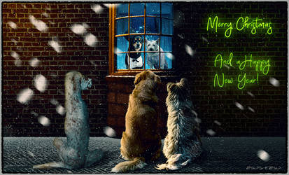Merry Christmas for all stray-dogs