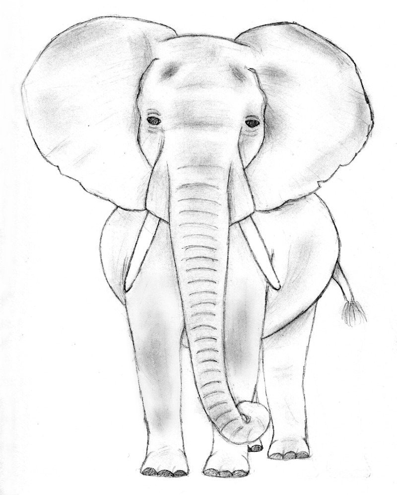 Elephant Sketch 1 by TheRebelWithNoCause
